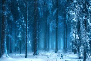 Winterwald by *RobinHalioua