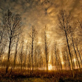 Shadows and Tall Trees by DavidCraigEllis