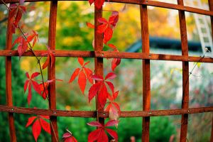 Playful colours of autumn by Prozper