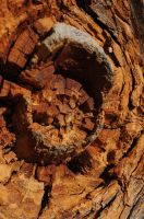 wood texture 8 by density-stock