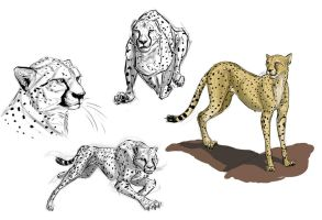 Big Cats Day 3 by Clairictures