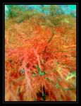 Colours of autumn by plusch