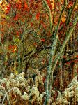 Shades of Autumn 2016,16 by MadGardens