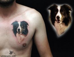 border collie by tattoozone