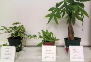 My Pet Plants by Domnopalus