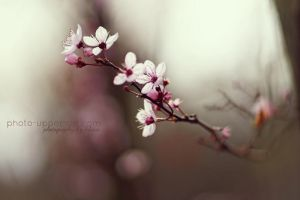 Spring to life by FeliDae84