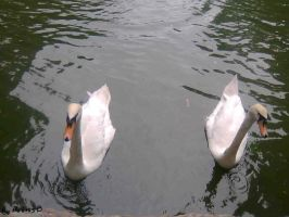 Old two by MatiasBloodbones