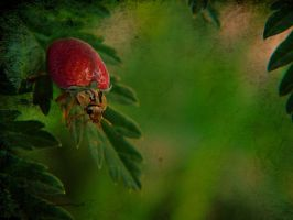 Berry Bug by 3punkins