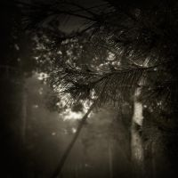 """songs from the wood..."" by Kaarmen"