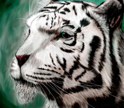 White Tiger by DmierMortus