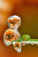 Frosted dewdrop 4 by Smederevac