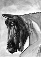 War Horse - unfinished charcoal by Summitwulf