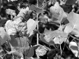 leaves03 by dcretch57