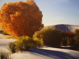 Autumn Splendor at White Sands by SharPhotography