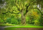 The Oak Garden In Hdr by Photography-by-Image