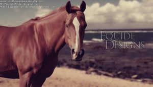 Chestnut Beach HP by EquideDesigns