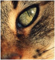 *My Cat's Eye* by GrotesqueDarling13