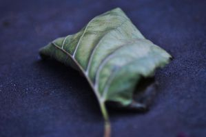 Like a leaf.. by CareJohnson
