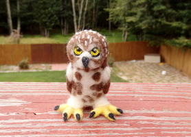 Needle Felted Northern Saw-Whet Owl Soft Sculpture by DancingVulture