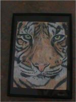 tiger in pencil ready for art exhibition by angel-brittony-adams
