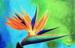 A Paradise Bird Flower - Colored pencils. by f-a-d-i-l