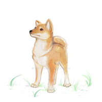 Aiko the Shiba Inu by OOT-Link