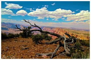 Grand Canyon Fallen tree by jaydoncabe