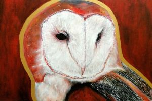 Dos Barn Owl by ckrickett