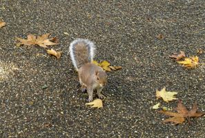 Squirrel by gee231205