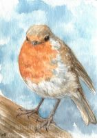 Red Robin ACEO by Pannya