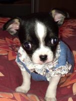filou her sister as puppy by theladyinred002