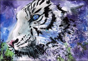 WHITE TIGER by JonyRichardson