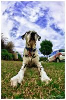 Dante on lawn HDR by jaydoncabe