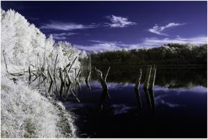 turtle pond ir by BrianWolfe