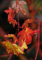 Rainy Leaves by photoquilter