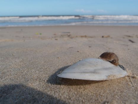 a Shell On a Shell by NatalieNeoh