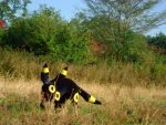 Real Umbreon 2 by leafeon-ex