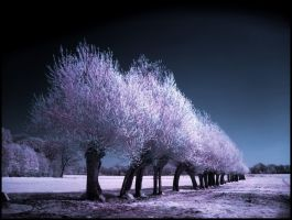 Spring Trees infrared... by MichiLauke