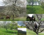 My Riding Adventures (1) by LisAlice5472