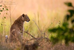 The Elusive One by MorkelErasmus