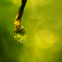 Product of Life by onixa