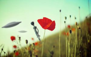 coquelicot 1 by Airplane