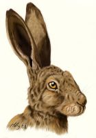 Hare by Orlifan