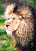 Lion by NorthumbrianArtist