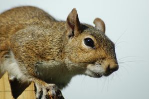Squirrely II by OrphieG