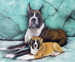 Boxer Dogs by kimbearlys
