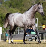 STOCK - 2014 Arabian Challenge-122 by fillyrox