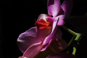 Orchids by iCoffeeholic
