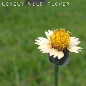 Lonely Wild Flower by akasagiphan