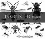 Insects by Lileya